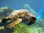 черепаха.bmp