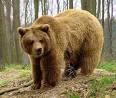 медведь.bmp