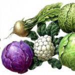 Происхождение капусты