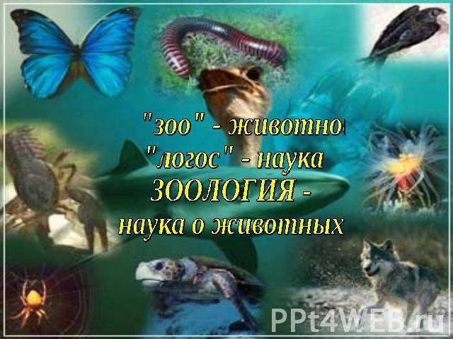 http://ppt4web.ru/images/797/26418/640/img1.jpg