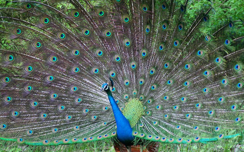 http://windesk.ru/wp-content/uploads/2013/01/BeautifulBirds.jpg