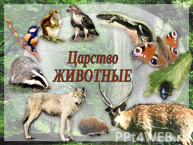 http://ppt4web.ru/images/797/26418/640/img0.jpg