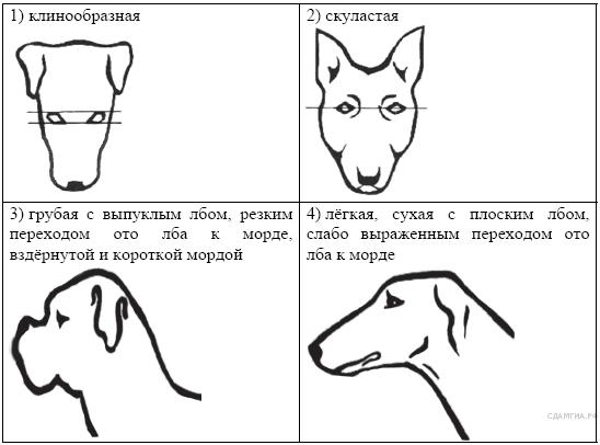 http://bio.sdamgia.ru/get_file?id=209