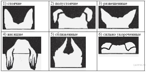 http://bio.sdamgia.ru/get_file?id=210