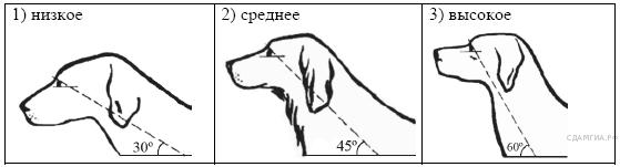 http://bio.sdamgia.ru/get_file?id=211