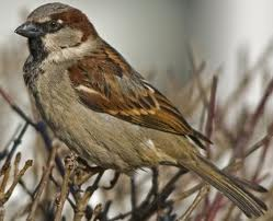 E:\Работа\Портфолио мой\соц. проекты\Покормите птиц зимой\фото\images.jpg