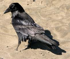 E:\Работа\Портфолио мой\соц. проекты\Покормите птиц зимой\фото\images (7).jpg
