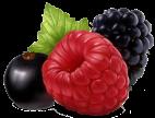 berries_38.png