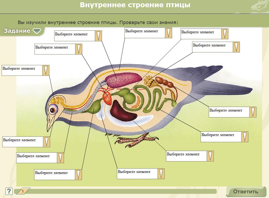 картинка внутреннего строения птицы лицо