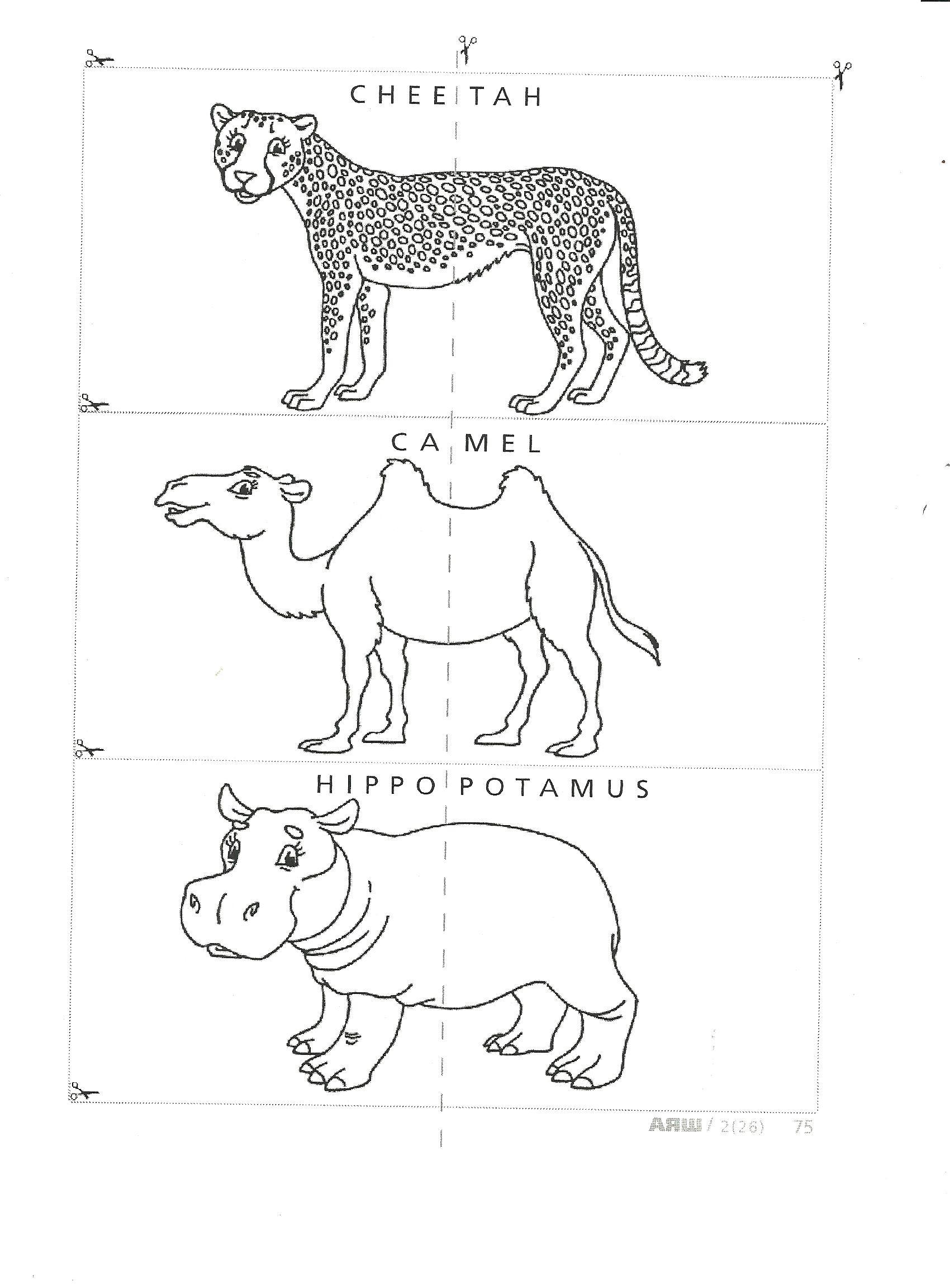 G:\Урок английского языка Животные Сафари Парка 3 класс УМК Millie учитель Штурмина ОС шк№18\Приложение2.jpg