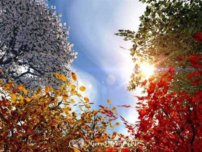 card-xp - фото альбом Wallpapers - Фото Wallpapers, закачать фото, фото хостинг, мои фотографии