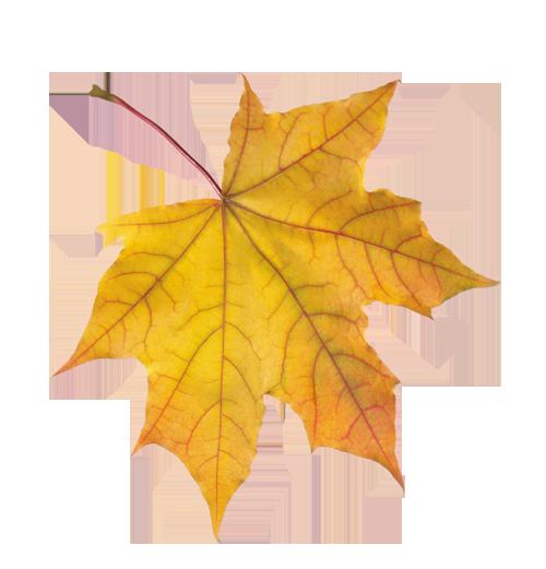 Кленовый листок изображение - рисунки из синволов