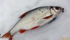 Поиск активной рыбы безмотыльной снастью