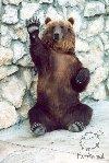 Медведь_6