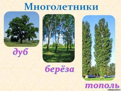 http://collegy.ucoz.ru/_ld/40/s79554108.jpg