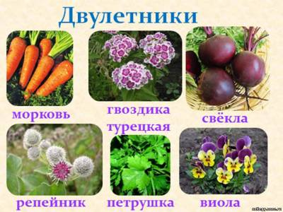 http://collegy.ucoz.ru/_ld/40/s94292955.jpg