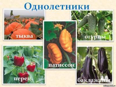 http://collegy.ucoz.ru/_ld/40/s49101805.jpg