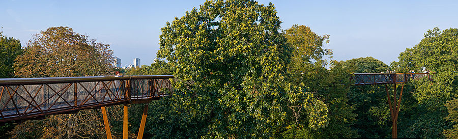 http://upload.wikimedia.org/wikipedia/commons/thumb/c/c2/Kew_Gardens_Treetop_Walkway_-_Sept_2008.jpg/900px-Kew_Gardens_Treetop_Walkway_-_Sept_2008.jpg