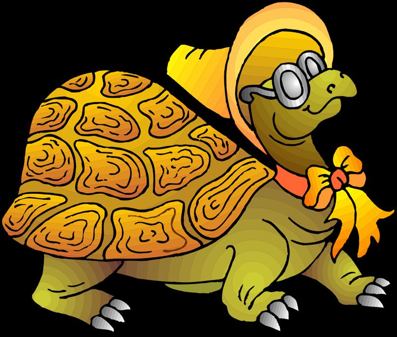 Детсад картинки черепаха тортила