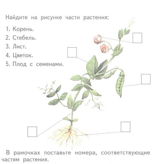 Описание: Части_растения