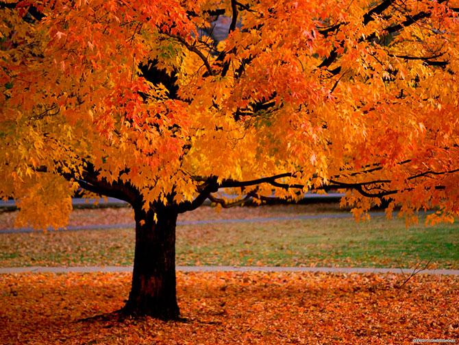 Nova Scotia Autumn Foliage 2013 Consumer Product Review