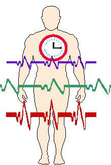 http://www.yoga-kiev.org/wp-content/images/clock1.jpg