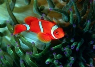 http://www.symbolsbook.ru/images/R/Fish1.jpg