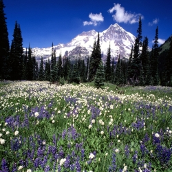 C:\Documents and Settings\Admin\Рабочий стол\Seasonal Beauty, Mount Rainier, Washington - 160.jpg