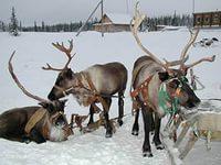 Природа Северного Урала: нарьян-мар.jpg