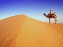 Camel Wallpapers - JoBSPapa.com