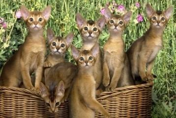http://www.zastavki.com/pictures/1920x1200/2011/Animals_Cats_Cats_in_a_basket_032173_.jpg