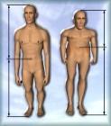 http://900igr.net/datai/biologija/Proportsii-cheloveka/0007-005-Garmonichnost-proportsij-tela-javljaetsja-odnim-iz-kriteriev-pri-otsenke.jpg