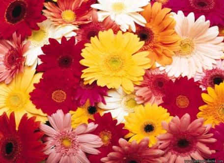 D:\Биология\природа\Цветы\Flowers_02.jpg