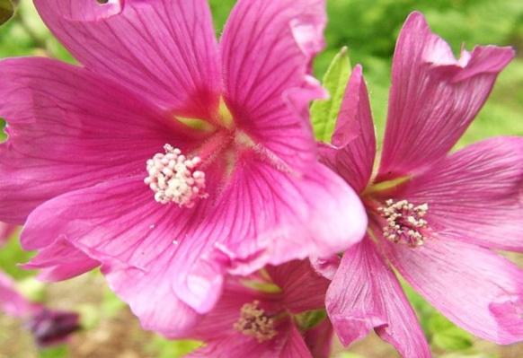D:\Биология\природа\Flowers_12.jpg