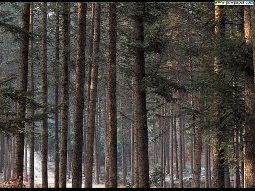 D:\Биология\природа\FOREST.JPG