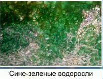 http://d3mlntcv38ck9k.cloudfront.net/content/konspekt_image/42193/cfd2b8c0_f5fe_0130_8a15_12313d0128c8.jpg