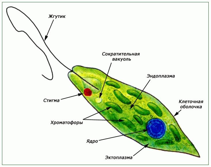Глоссарии