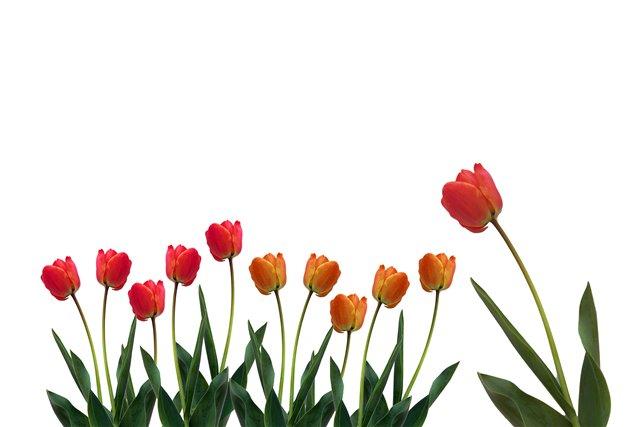 hello_html_m32ceaef7.jpg