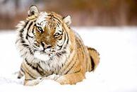 Классные фото животных от фотографа Suha Derbent