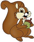squirrel011