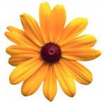 http://im3-tub-ru.yandex.net/i?id=483356857-43-72