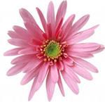 http://im8-tub-ru.yandex.net/i?id=310923572-66-72