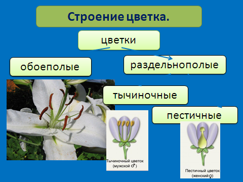 hello_html_216c6b65.png