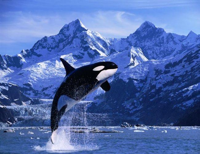 1235020682_whales_19.jpg