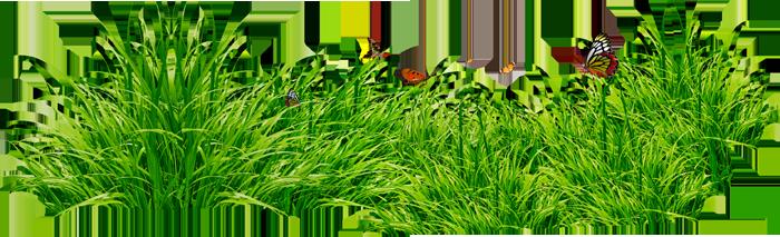 PNG клипарт - Травка - Цветы,фрукты,деревья,кусты,трава PNG !--if()--- !--endif-- - Каталог статей - PNG