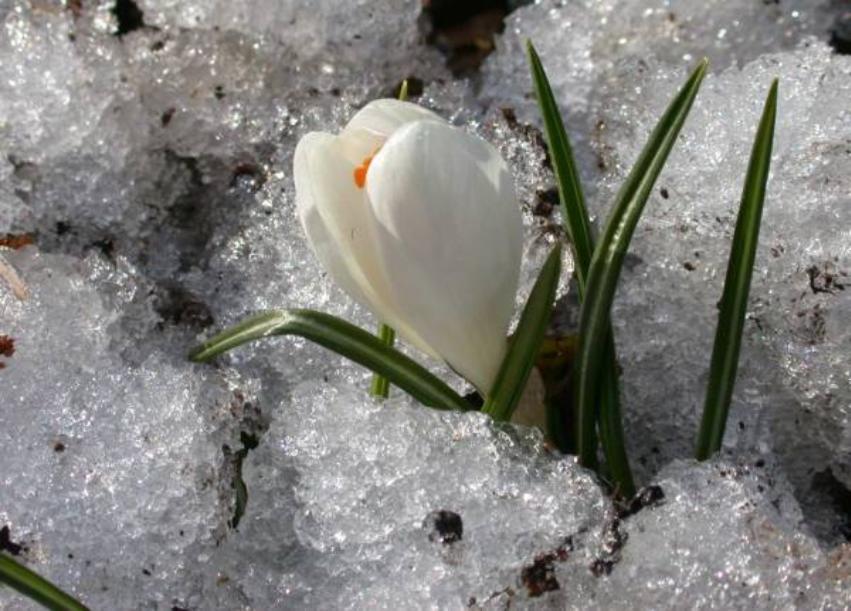 весна4.jpeg