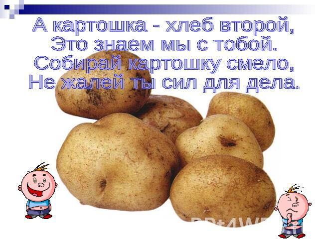 http://ppt4web.ru/images/1402/41360/640/img12.jpg