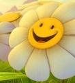 C:\Save\Серболина\Цветочки\camomile.jpg