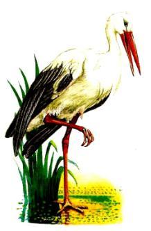 C:\Documents and Settings\Admin\Мои документы\Мои рисунки\птицы разные\аист.jpg