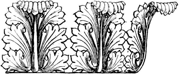 acanthus_14298_lg